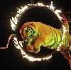 Цирки в Петродворце