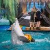 Дельфинарии, океанариумы в Петродворце